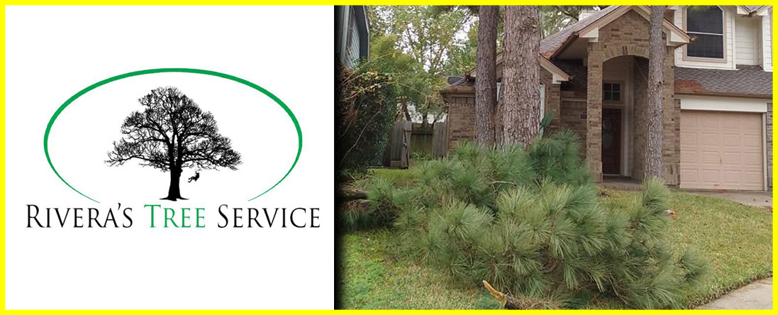 Rivera's Tree Service Offers Emergency Tree Service in Houston, TX