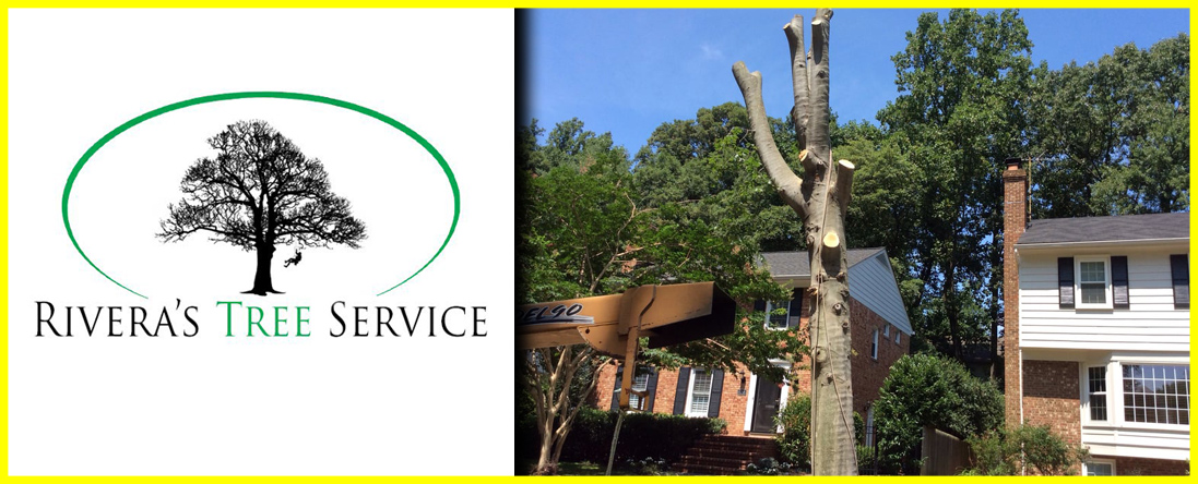 Rivera's Tree Service Offers Tree Removal in Houston, TX