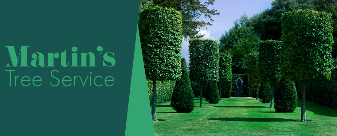 Martin's Tree Service is a Tree Company in Georgetown, MA