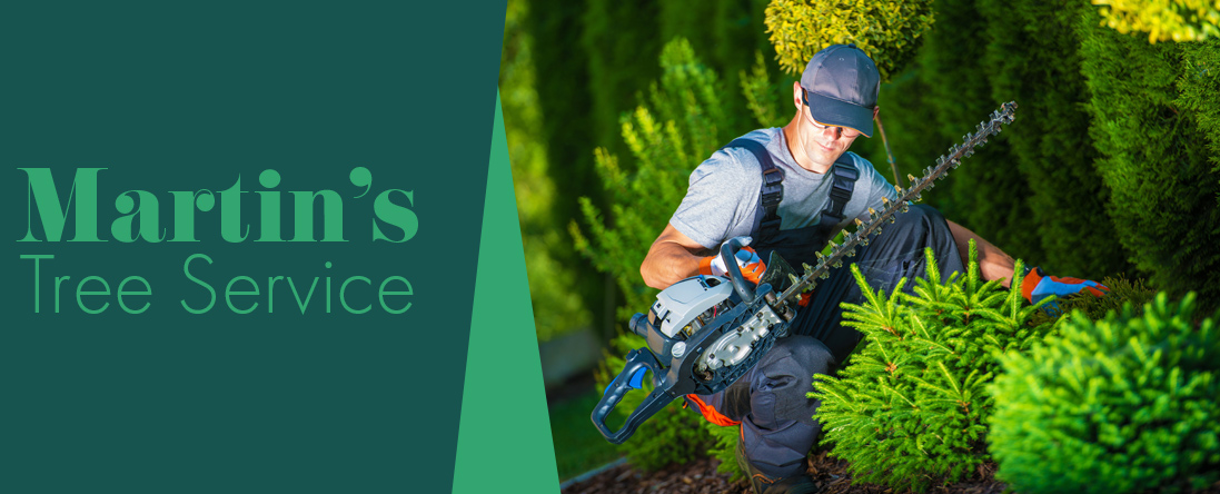 Martin's Tree Service Offers Tree Pruning in Georgetown, MA
