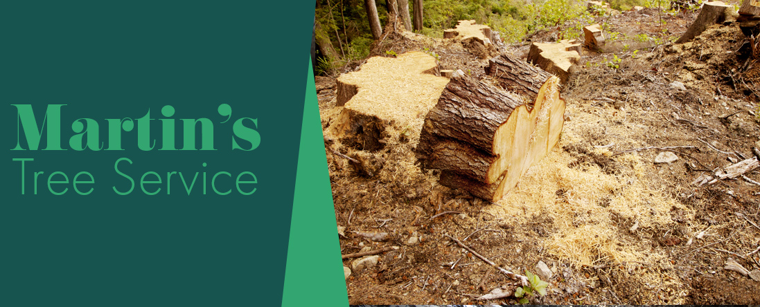 Martin's Tree Service Offers Stump Removal in Georgetown, MA