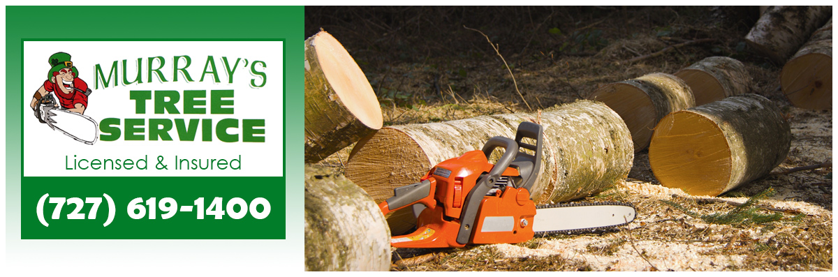 Murray's Tree Service is a Tree Company in New Port Richey, FL